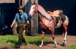 Horse in Red Dead Redemption 2: how to train you